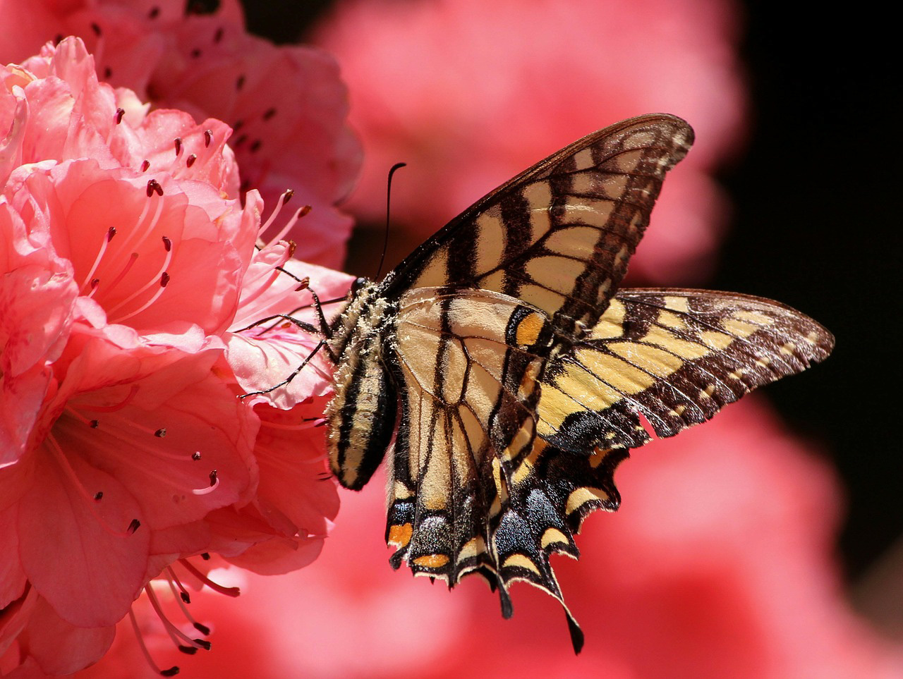 butterfly-108616_1280_edited