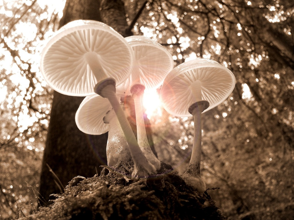 bunch of mushrooms